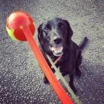 Rory_Dog_Walking